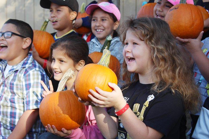 cunningham pumpkins 3