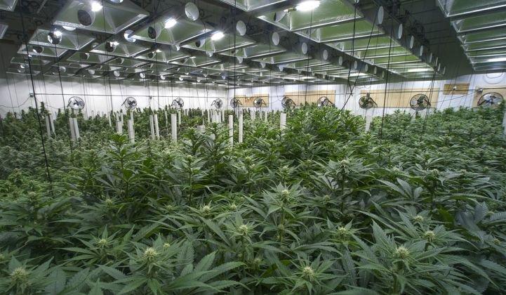 indoor-marijuana-grow-XL_721_420_80_s_c1.jpg