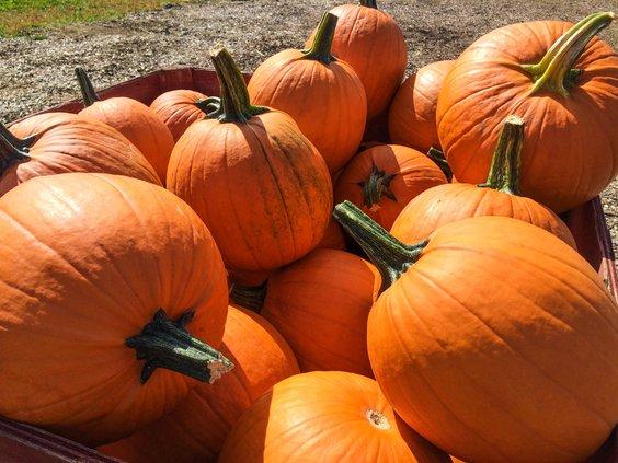 Pumpkin graphic.jpg