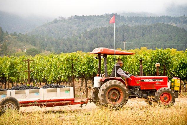 543-harvest.jpg