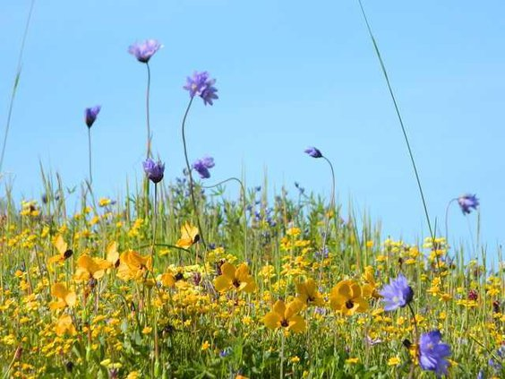 Wildflowers pix