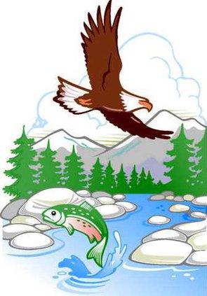 fish and wildlife