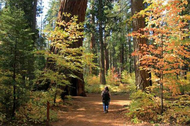 Calaveras-Big-Trees-State-Park-Lisa-Boulton-01 preview