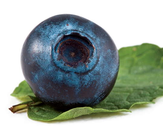 2286-blueberry.png