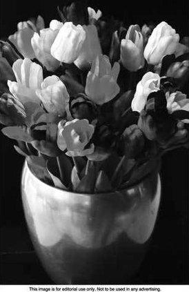 Valentine Roses 3