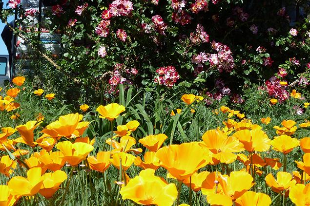 956-garden.png