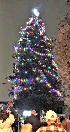 Hospice tree.jpg