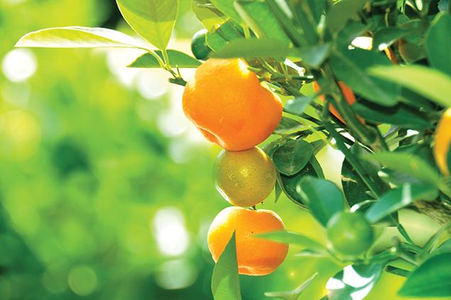 2246-fruittree.png