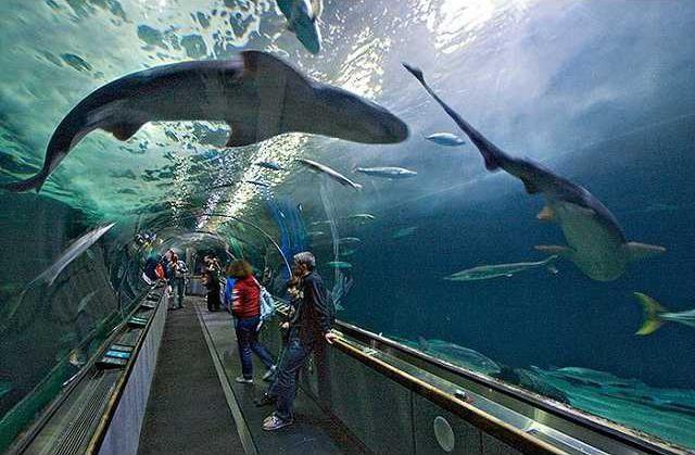 Aquarium-of-the-Bay2