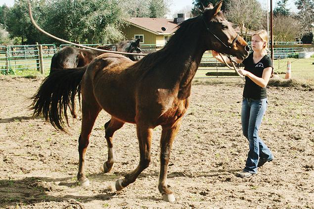 1040-horses.png