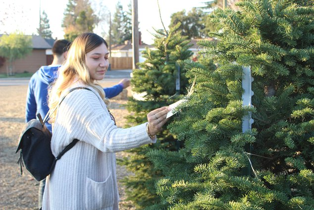 christmas tree shortage 1
