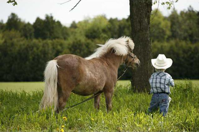 HORSE AND KID