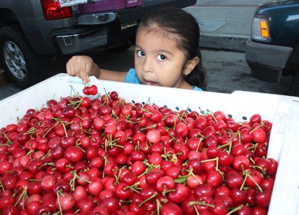 Cherries pix.jpg