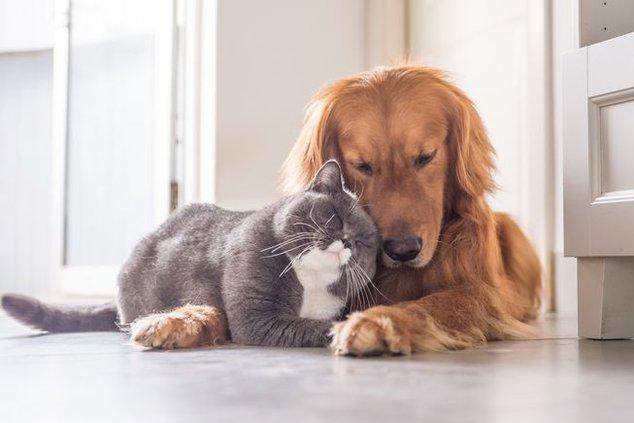 DOG cat.jpg
