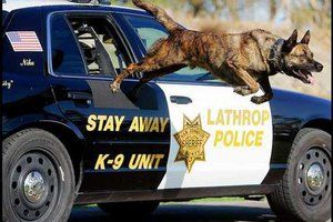 lathropo police K9e.jpg