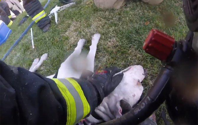 Turlock firefighters rescue dog