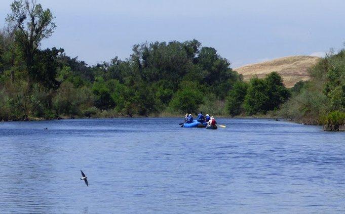 P1040026-Swallow-on-the-Tuolumne-River.jpg