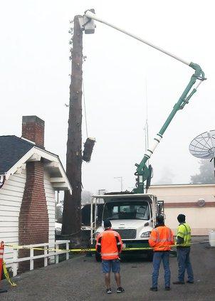 Tree pix.jpg