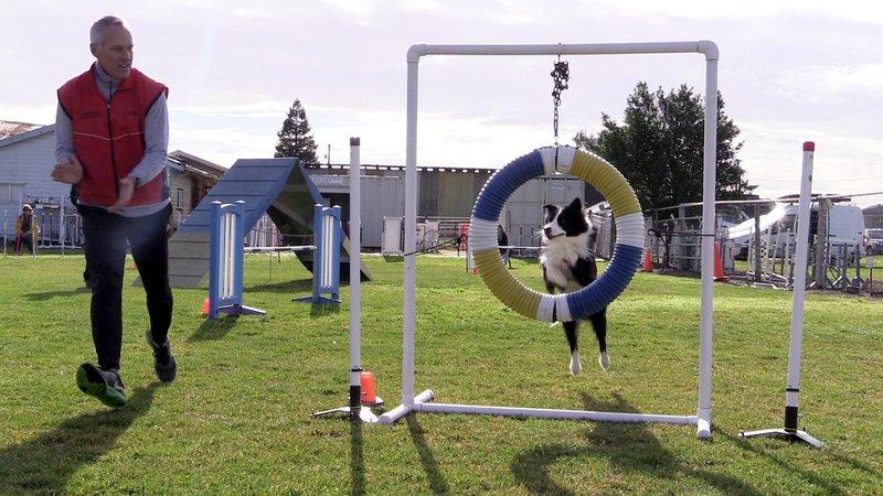 dog agility trials 2