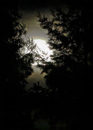 Snow Moon pix.jpg