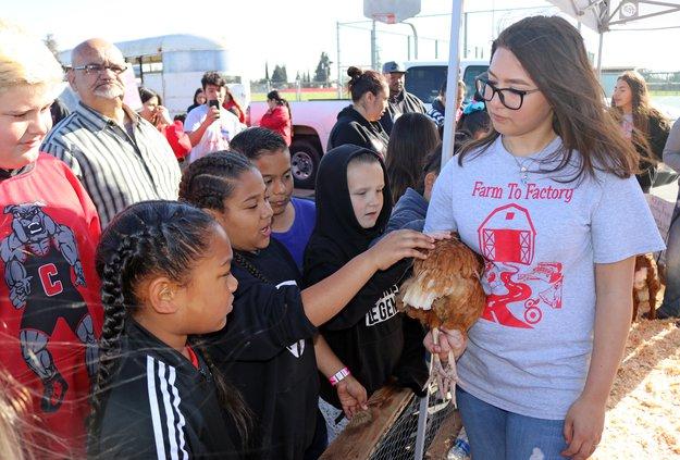 Katie Hood with chicken.jpg