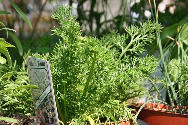 Herbs pix.jpg