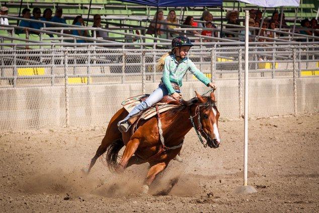 fair horse