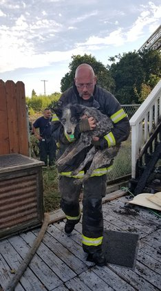 denair dogs rescue