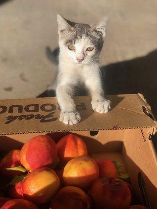 peaches cat