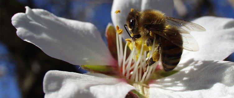 top bee