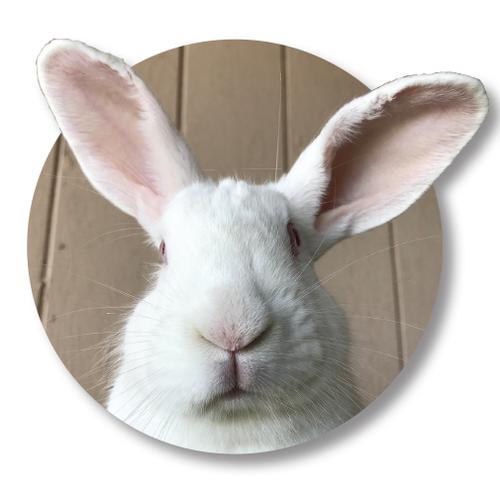 Farm-bunny.png