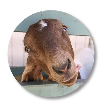 Farm-goat.png