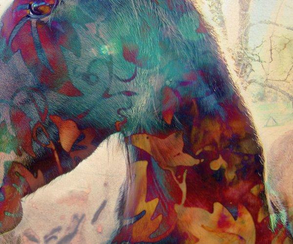 calaveras art show
