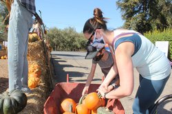 riv pumpkin patch