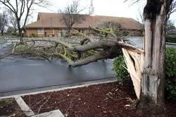 Downed LDS tree