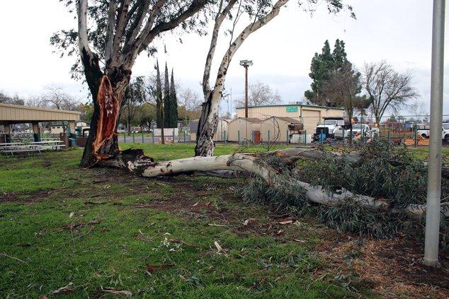 Smyrna Park tree down