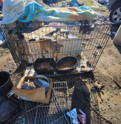 homeless dogs 2