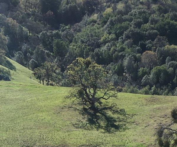 del valle 1
