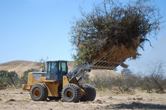 bulldoze orchards