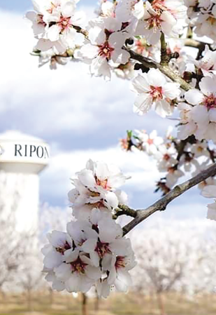 ripon-2.png