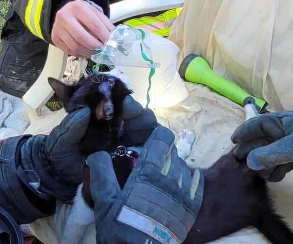 Denair fire cat rescue