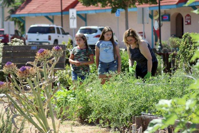 Community Garden Ceres