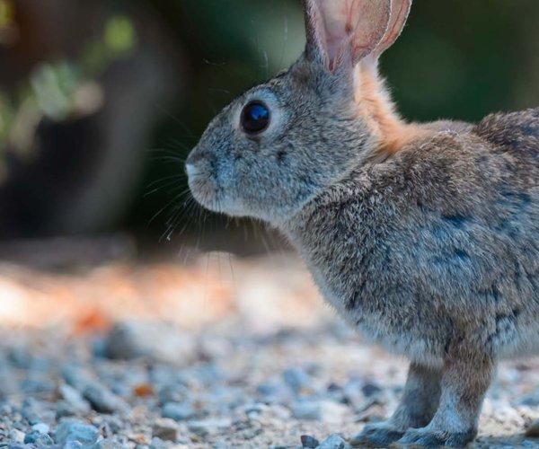 Rabbit pix