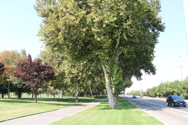 woodward park trees