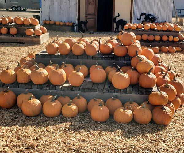RAM Farms pumpkins