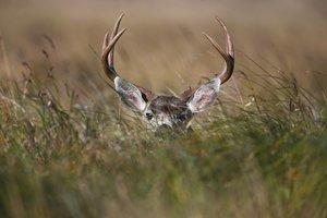 deer CO